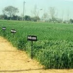 Continuation, strengthening and establishment of Krishi Vigyan Kendras in the XII Plan