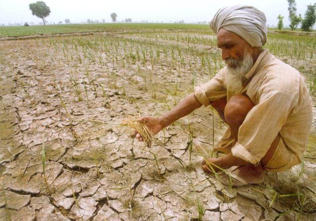 barren-farmland-indianbureaucracy-india- punjab farmer