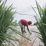 irrigation sector-Tamil Nadu-indianbureaucracy