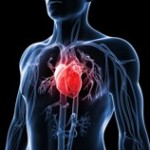 Traumatic events do take toll on the heart
