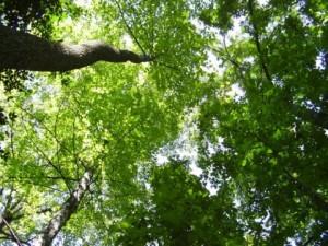 green-tree_indianbureaucracy