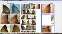 great wgreat white sharks-Indian Bureaucracyte sharks-Indian Bureaucracy