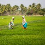 Agro-Economic Research Centres ,AERCs-indianbureaucracy