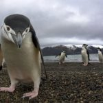 Antarctica's biodiversity -indianbureaucracy