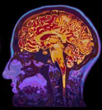 Sympathetic nervous system -indianbureaucracy
