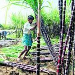 UP Government decides to change sugarcane price fixation policy