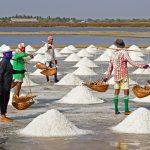 Salt Farming Industry