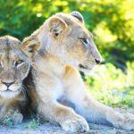 Animal carnivores