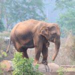 Capturing elephants