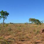 Amazon rainforest conservation
