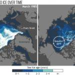 Warming, sea-ice loss
