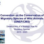 13thConference of Parties (COP) of the Convention on the conservation of migratory species of wild animals (CMS),