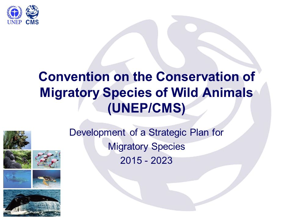 13th Conference of Parties (COP) of the Convention on the conservation of migratory species of wild animals (CMS),