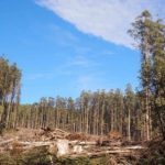 Forest soils need many decades to recover
