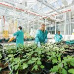 New plant breeding technologies for food security