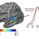 Brains of blind people adapt to sharpen sense