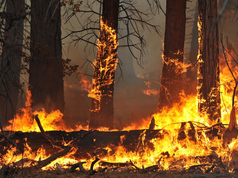 How does wildlife fare after fires?