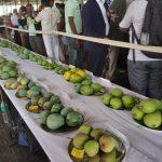 Mango and Jack fruit Diversity Fair-2019