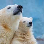A polar-bear-inspired material
