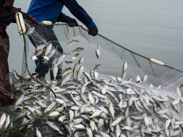 Fishing among worst jobs for health