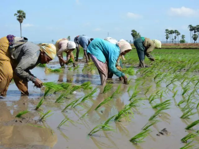 How climate change affects crops in India