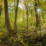 How forest conservation can succeed
