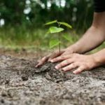 How we care for the environment may have social consequences
