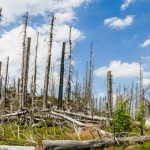 University of Birmingham study shows impact of largescale tree death on carbon storage