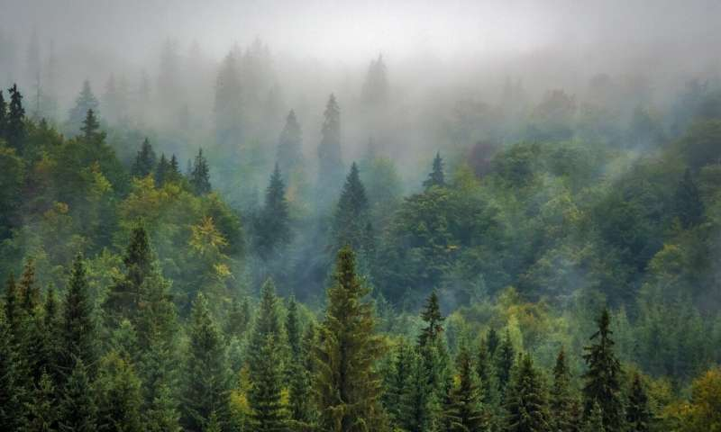Aerosols from coniferous forests no longer cool the climate as much