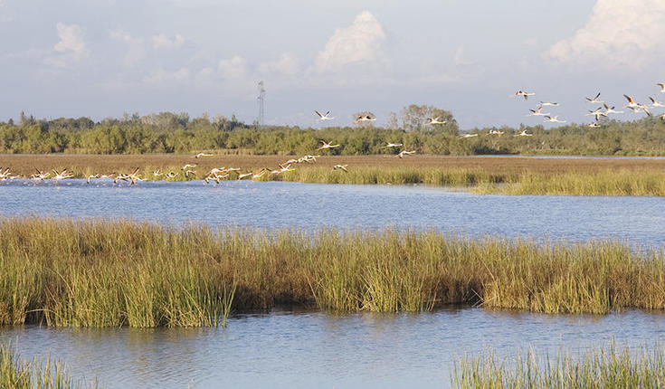 Biodiversity has substantially changed in one of the largest Mediterranean wetlands