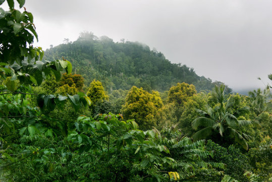 Global levels of biodiversityGlobal levels of biodiversity