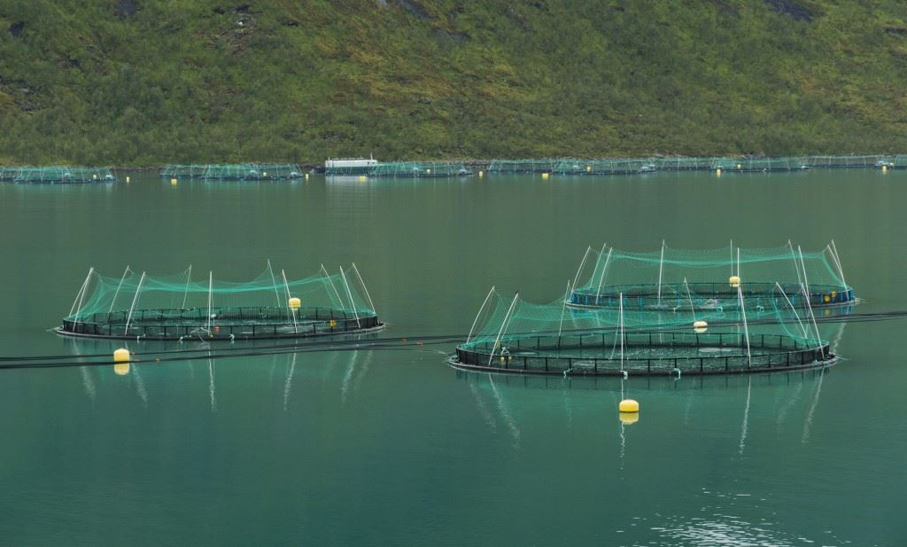 Traditional Fish Farming CSS on Blue Revolution